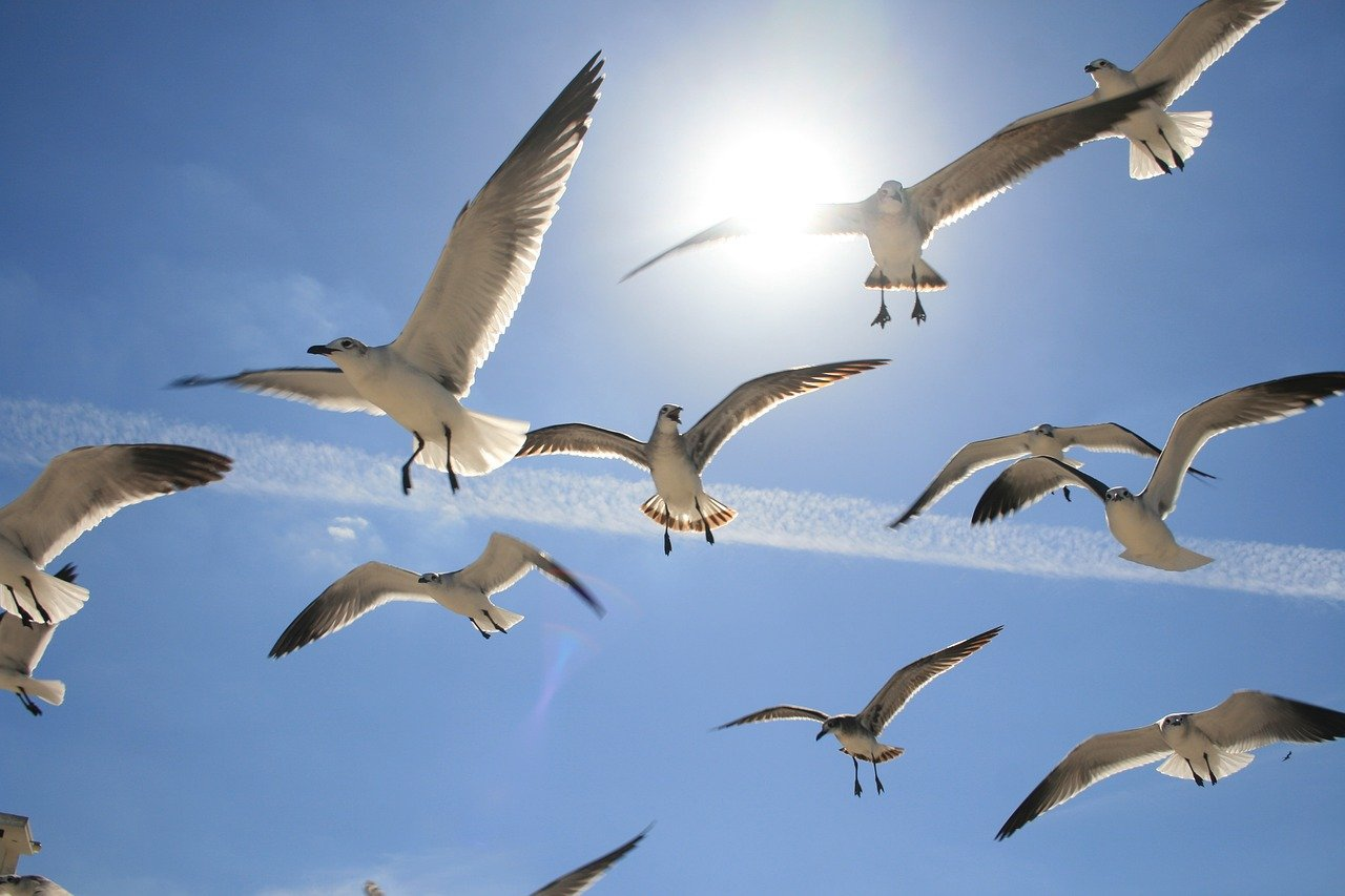 flying-1231568_1280